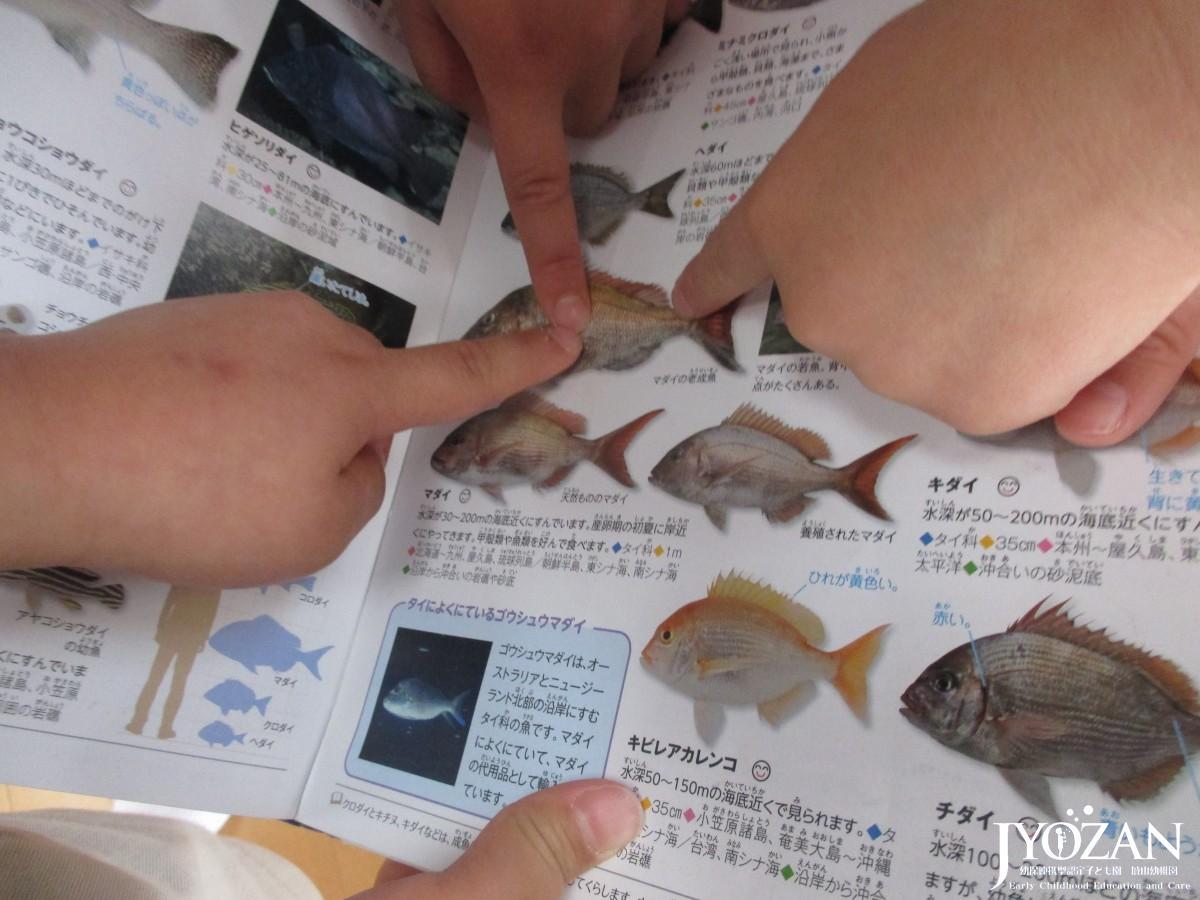 お魚調べ♪